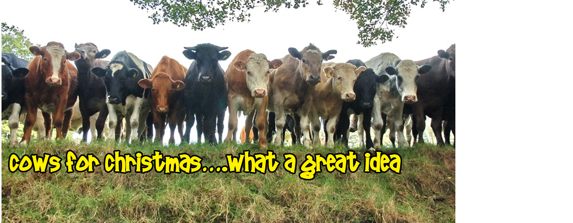 Cows for Christmas….what a wonderful idea!